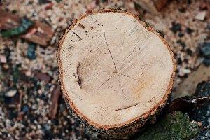 Round firewood stump