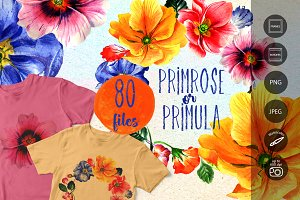 Primrose or Primula flowers PNG set