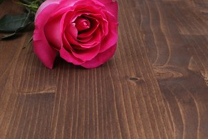 rose on wood background
