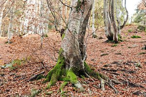 Tree covered on moss at autumn