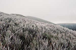 frozen grass in the winter morning