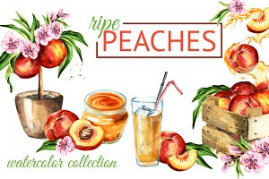 Peaches. Watercolor collection