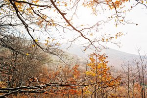 Autumn forest in mountains