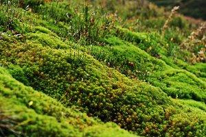 green moss background