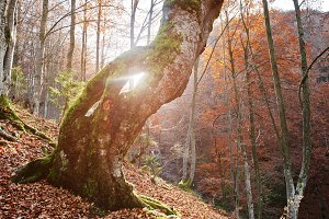 Amazing golden autumn wood forest
