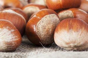 Hard hazelnut shells