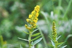 Wildflowers-Yellow