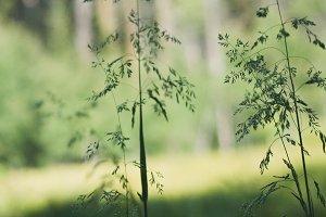 Wildflowers-Grasses