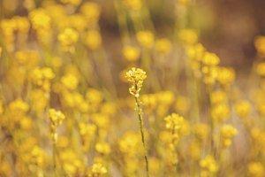 Yellow Spring Wildflowers