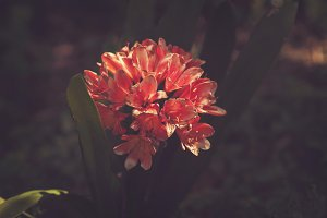 Orange Flower Bush