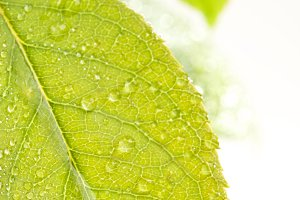 Close Up Leaf and Water Drops
