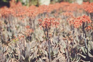Orange Flowering Bush
