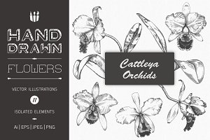 Hand Drawn Flower Illustrations