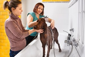groomer washing dog from the shower