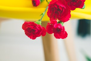 Carnations on a yellow chair