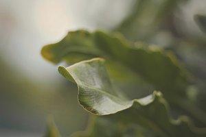 Green Fern Closeup
