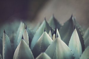 Succulent Spikes