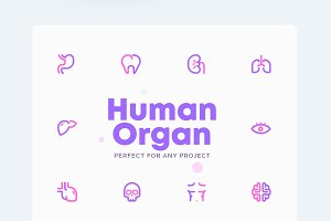 Anatomy - Human Organ Icons Set