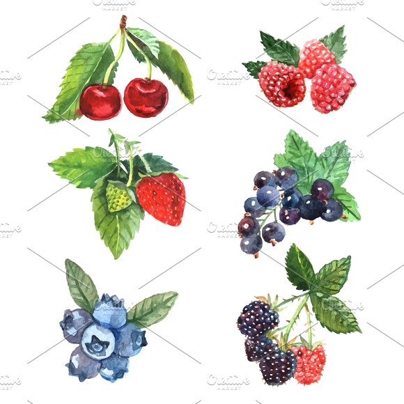 Watercolor berry set in Graphics