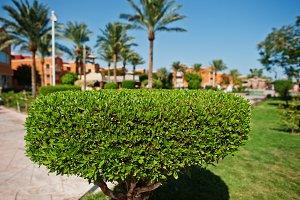 Bush background palms