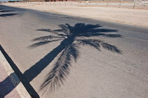 Shadows of palm trees