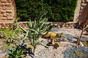 different cactus