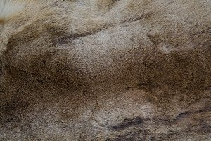 Natural brown fur texture background