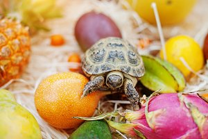 turtle on fresh exotic fruits