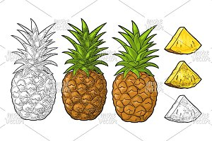 Whole and slice pineapple. Engraving