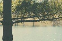 Lake Pine