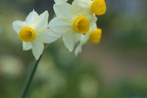 Flower makro