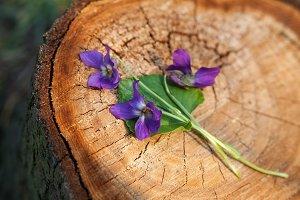 Violets on a stump.