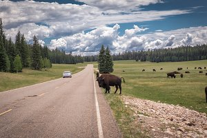Angry Buffalo, Northern Arizona, USA