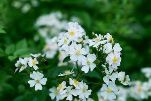 Spring tree blossom flowers