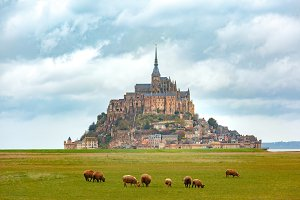 Mont Saint Michel and sheeps, Normandy, France