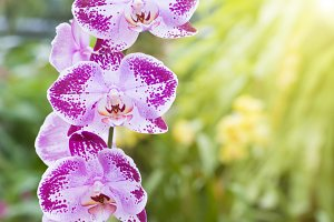 Violet orchids in a tropical forest