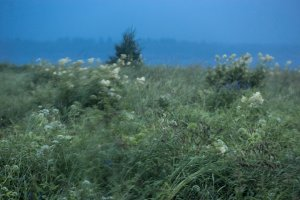 Blurred green meadow with taiga flowers and deep blue river in rainy day