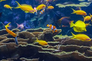Fishes tropical sea.