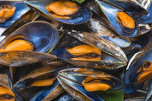 Steamed mussels