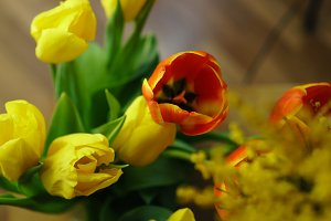 Buds of red and yellow tulips