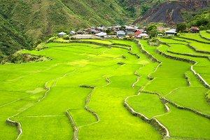 Rice terrace in Cordilera mountains