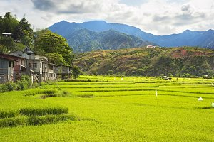 Rice fields, Philippines