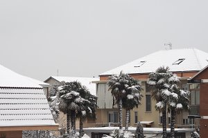 Snow on palm tree and roof