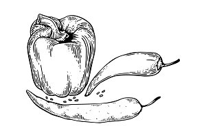 Peppers engraving vector illustration