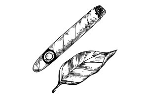 Cigar and tobacco leaf engraving vector