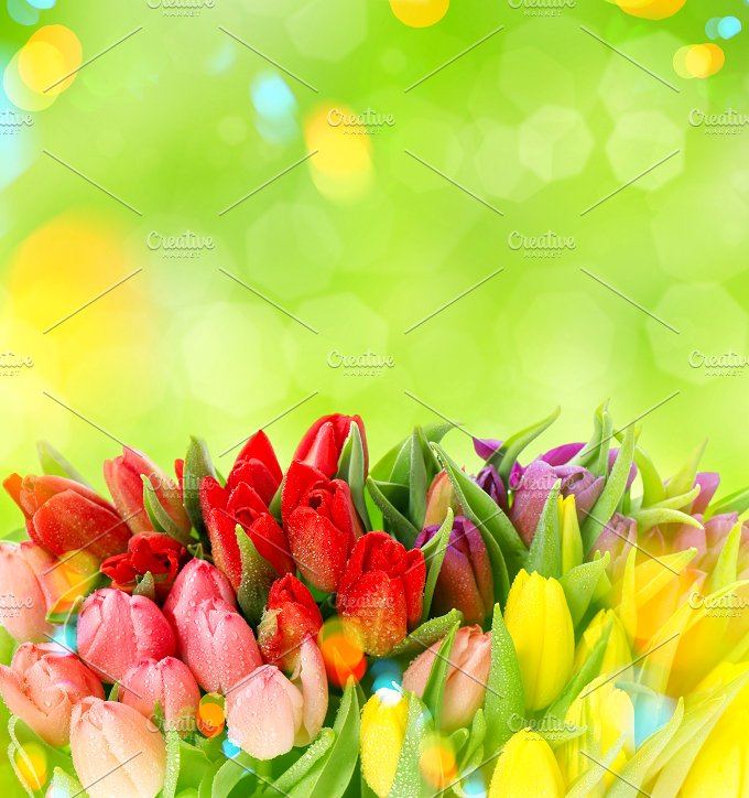 Spring Tulips. Easter Sale 50% OFF! - Nature