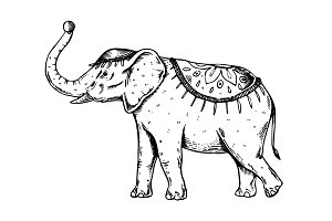Circus elephant engraving vector illustration