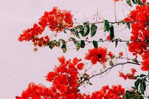 Flowers Canary Islands Minimal