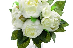 peony flowers isolated on white