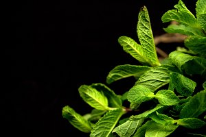 mint leaves on black background